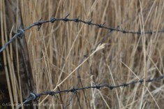 Barbed wire focus