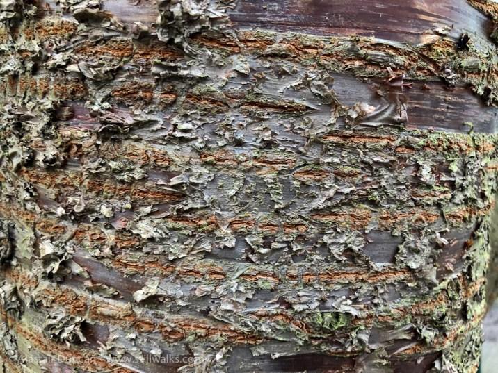 bark patterns