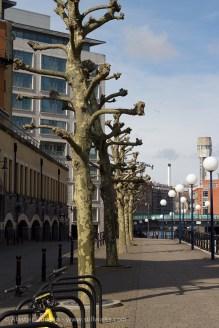 knobbly tree perspective