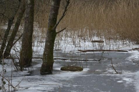 frozen woodland bog