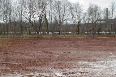Red Wetland