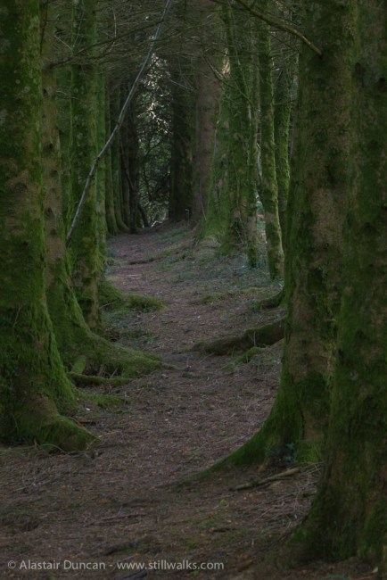 woodland alley