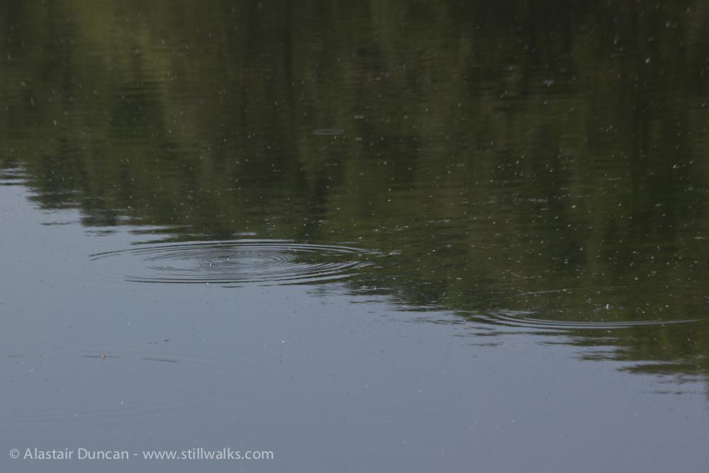 lake surface