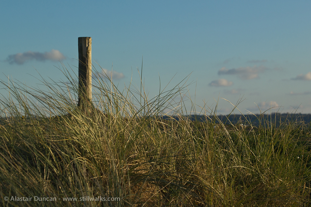 grass and post