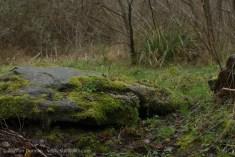 Dantwyn Quarry-17