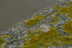 bank side wall moss