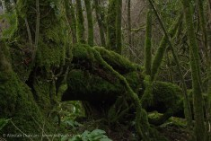 A depth of moss