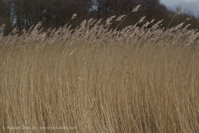 dancing marsh grass