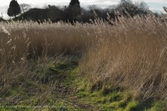 marsh footpath