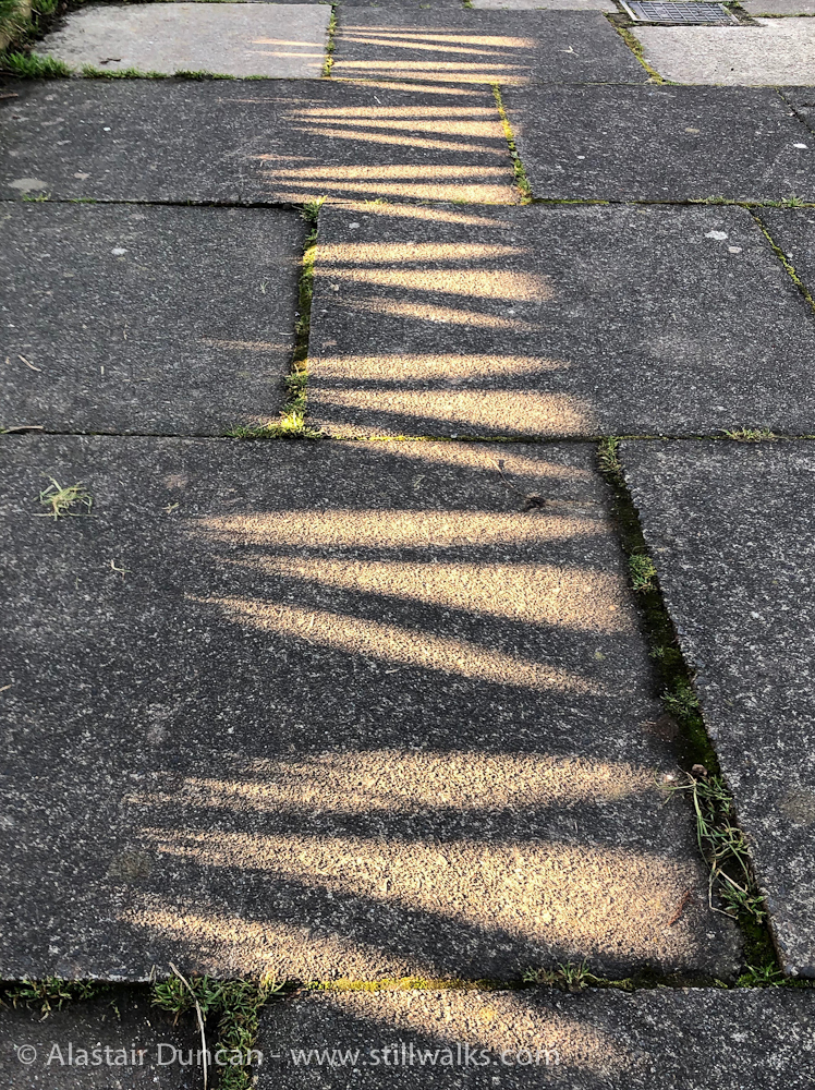shadow patterned pavement