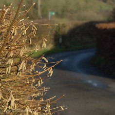 hedge and road