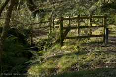 woodland entry point