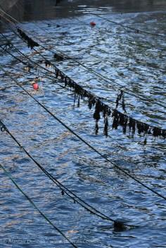 Penzance ropes