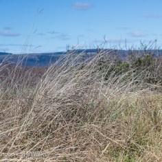 burrows grass