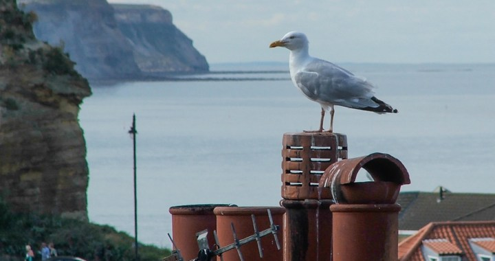 Gull on rooftop