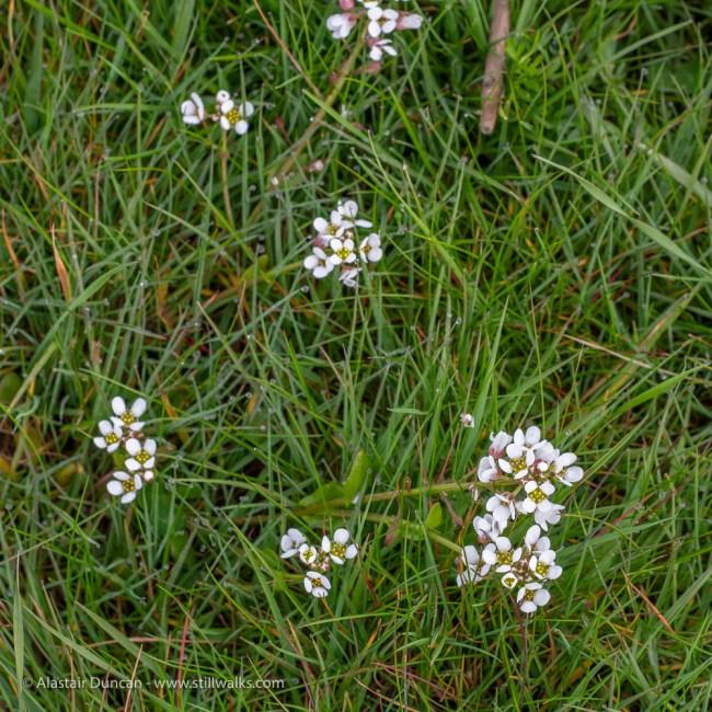 more marsh wildflowers