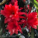 big red exotic bloom