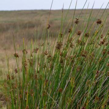 Upland vegetation