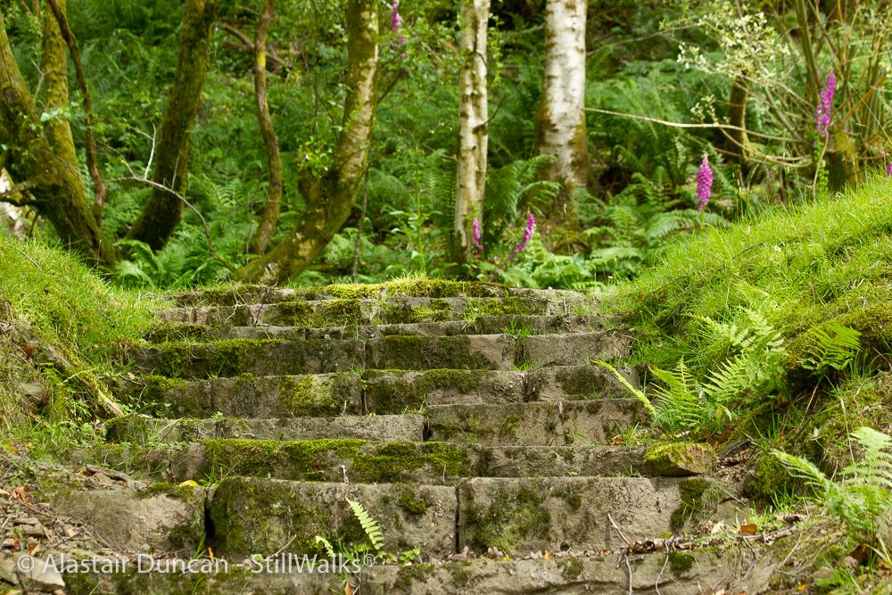 waterside steps