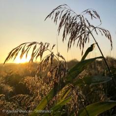 marsh grass and sunlight