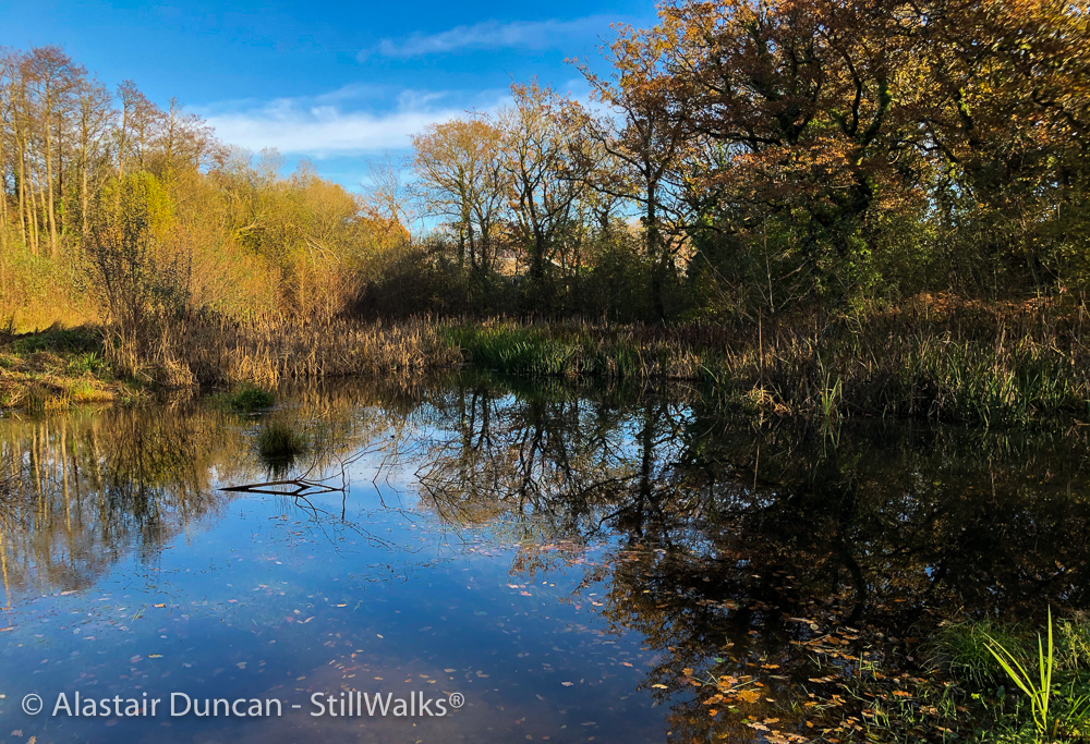 Woodland pond reflections