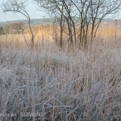 Frosty marshes