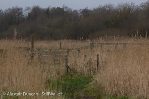 Estuary and Marshes-23