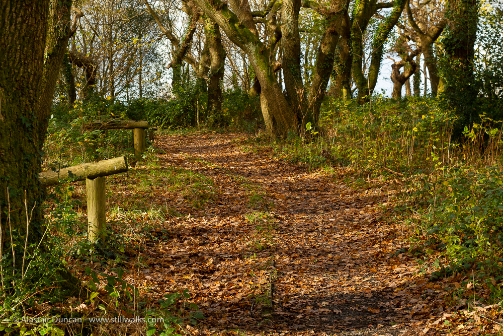 Coedbach oakwood