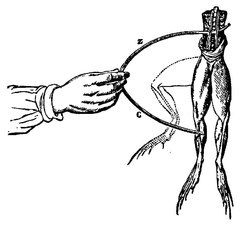 the history of electrical muscle stimulation and how it works