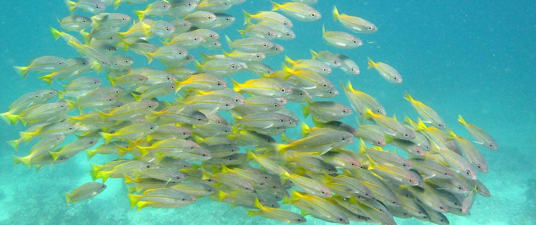 Stingray Divers - Fischschwarm Philippinen
