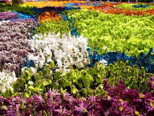 Flowers everywhere in Medellin