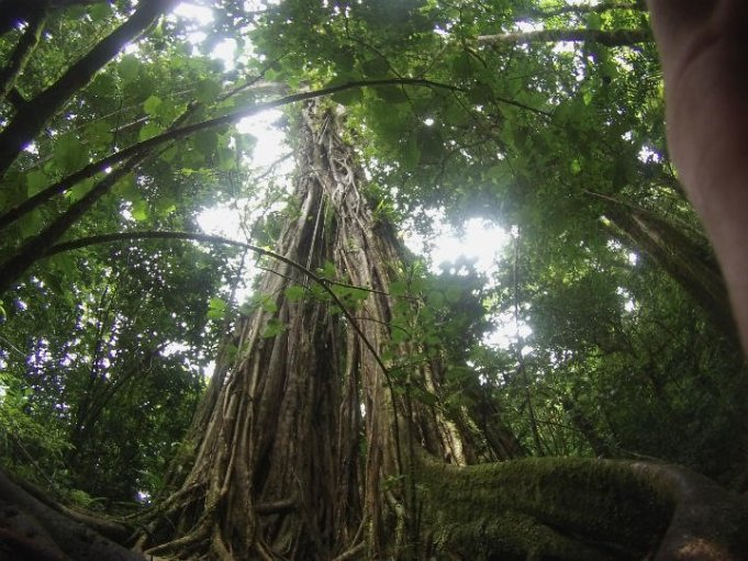 Walking in in the cloud forest of the Talamanoa from Lost and Found Hostel