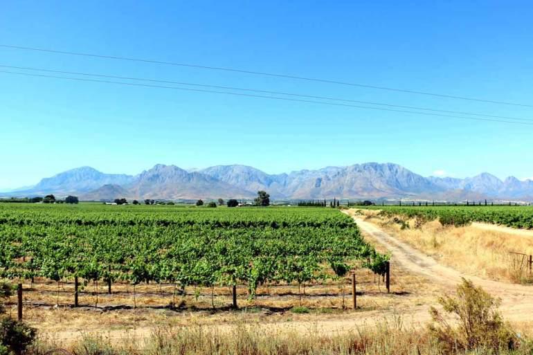 Deetlefs wine estate Rawsonville