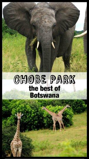 Chobe Pin