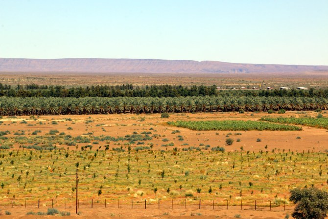 Date palm plantations, Southern Namibia