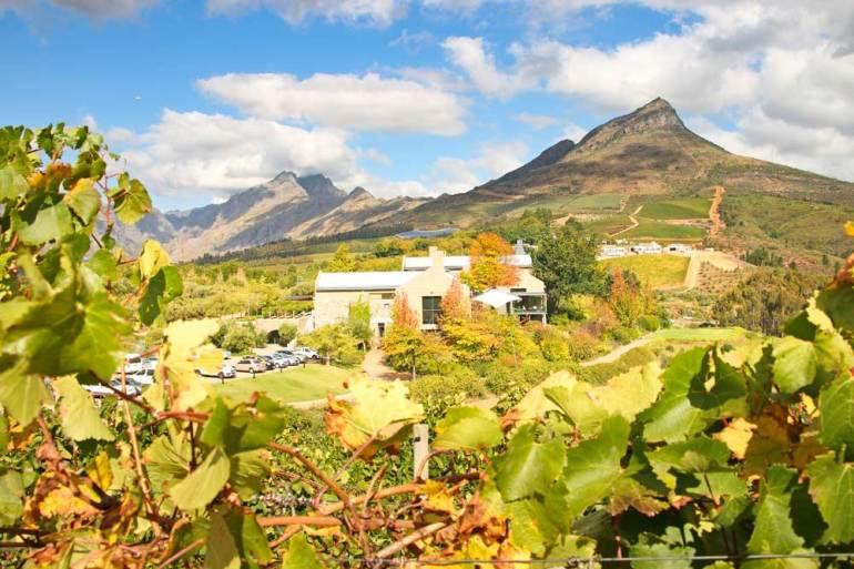 One of the wine farms near Stellenbosch, Cape Town