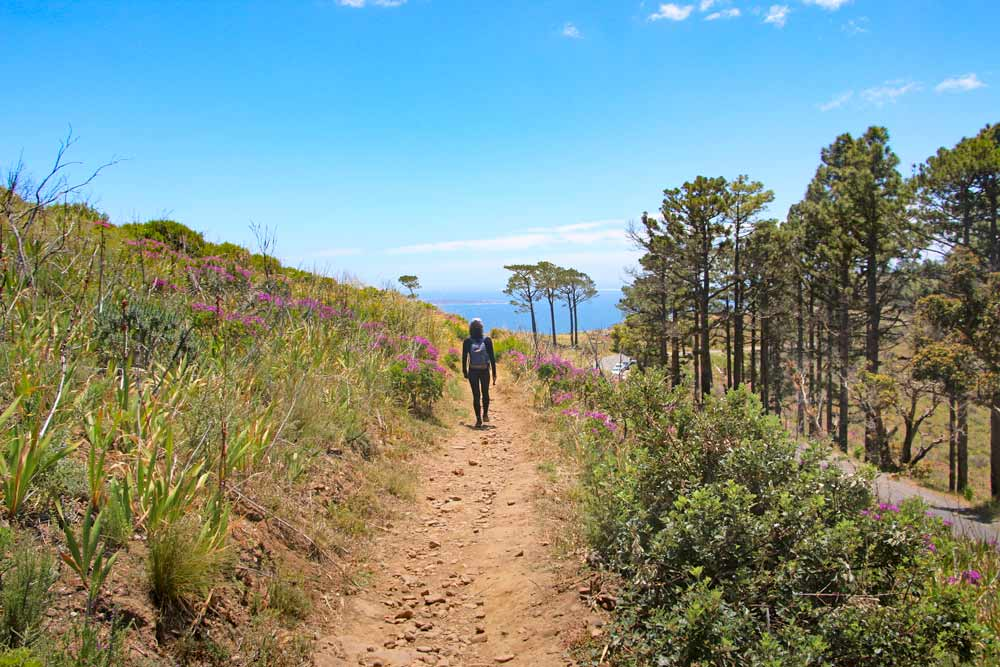 A hiking trail from Lion's Head to Signal Hill