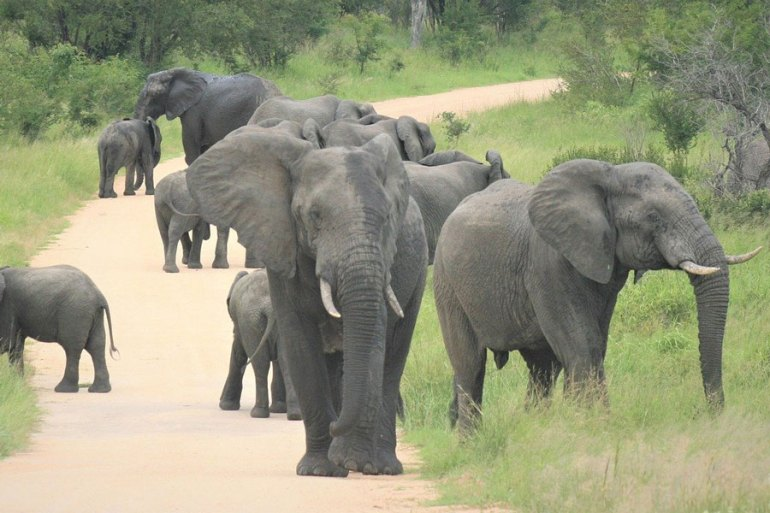 Elephants South Africa Safari on Honeymoon