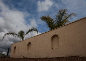 wall and two palms