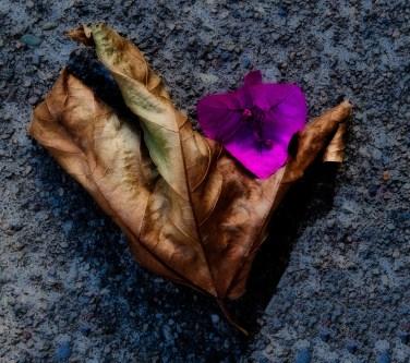 Leaf and Flower