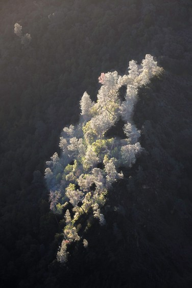 Morning sunlight catches trees on a ridge in the open space preserve