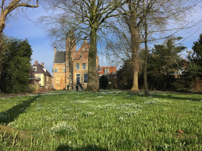 Snowdrops in the Martenatuin in Franeker.