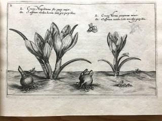 Chrispijn van de Passe, Jardins des fleurs, 1614.