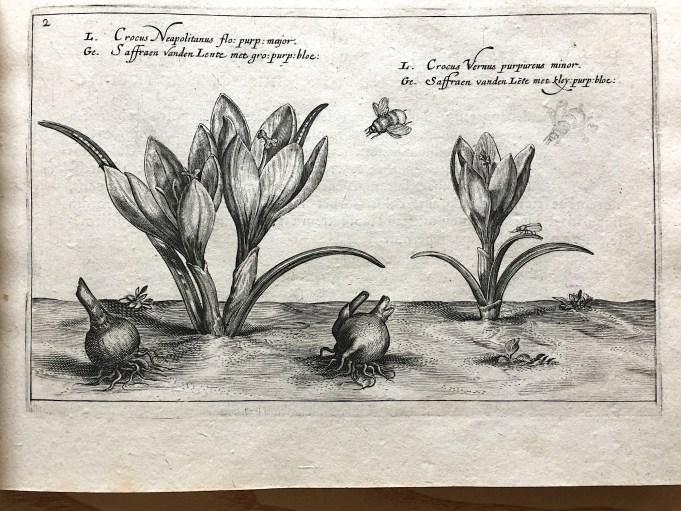 Christiaan van der Passe, Hortus Floridus (1616)