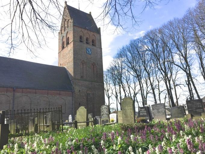 Holwortel bij de Sint Vituskerk in Stiens