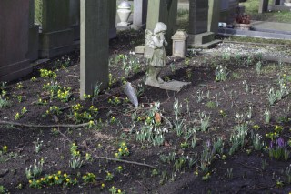 Winter Aconites, Snowdrops and Dutch Crocus at the St. Vitus churchyard in Stiens.