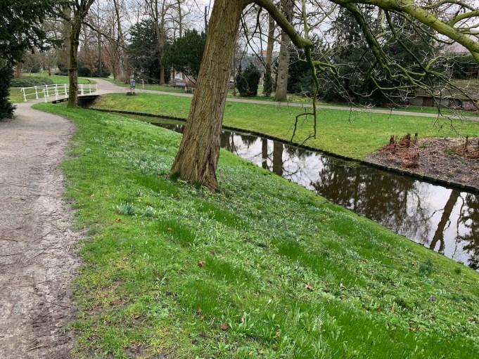 Sneeuwklokjes en blad van Knikkende vogelmelk in de Prinsentuin in Leeuwarden.