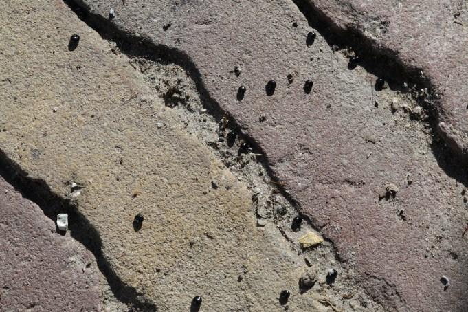 Zaad van de Holwortel door mieren naar het terras bij hun nest versleept, Stinze Stiens.