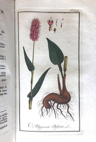 Adderwortel (Persicaria Bistorta), vroeger 'Polygonum Bistorta' in: Afbeeldingen der Artsenygewassen, Amsterdam (J.C. Sepp en Zoon), 1896.