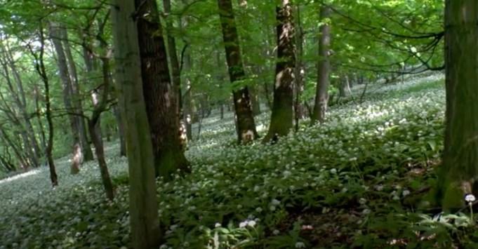 Daslook, in de Witte Karpaten.